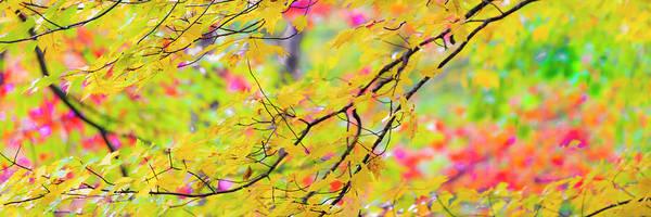 Photograph - Maine Fall Foliage Panorama by Ranjay Mitra