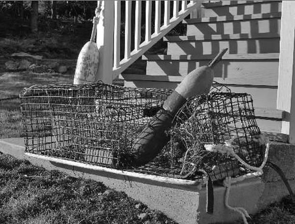 Laura Palmer Wall Art - Photograph - Maine Lobstah Trap by Laura Palmer