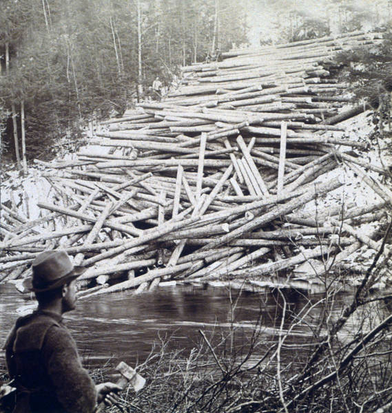 Aroostook Photograph - Maine Logging -  C 1903 by International  Images