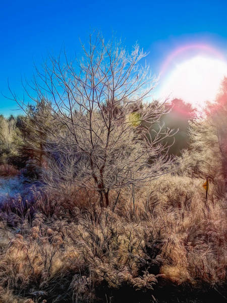 Photograph - Maine Morning Frost by Guy Whiteley