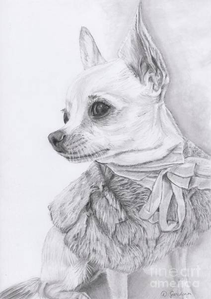 Furry Drawing - Maisie The Model by Debbie Gardener