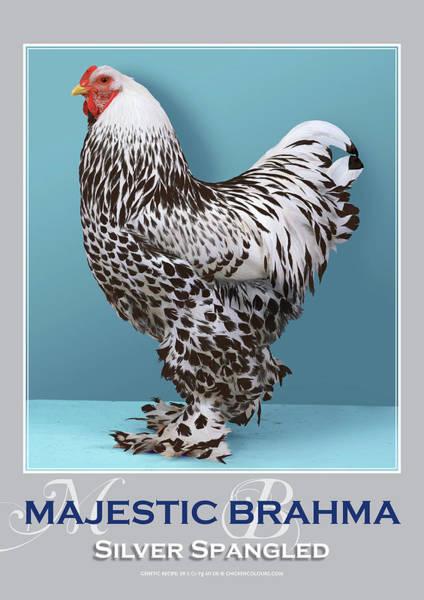 Digital Art - Majestic Brahma Silver Spangled by Sigrid Van Dort