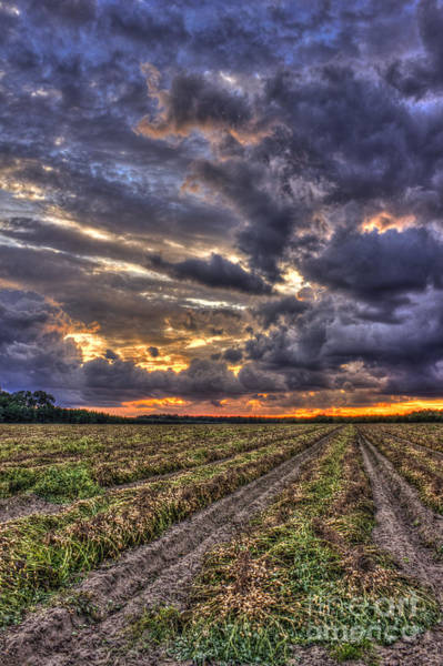 Photograph - Majestic Clouds And Peanuts by Reid Callaway