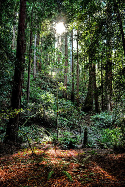 Photograph - Majestic Forest by Brian Tada