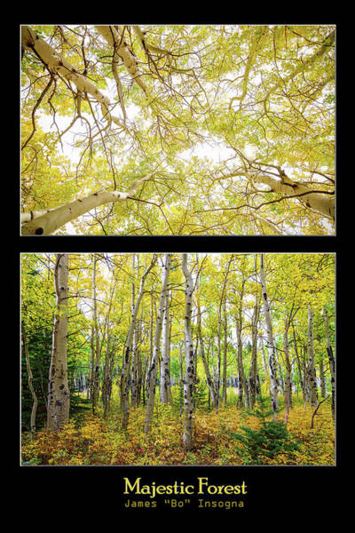 Photograph - Majestic Forest by James BO Insogna