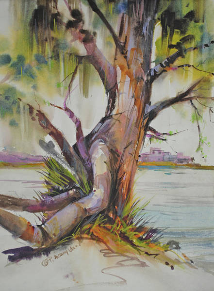 Painting - Majestic Live Oak  by P Anthony Visco