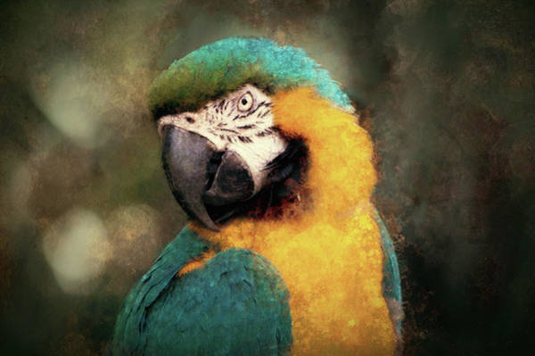 Photograph - Majestic Macaw by Susan Maxwell Schmidt