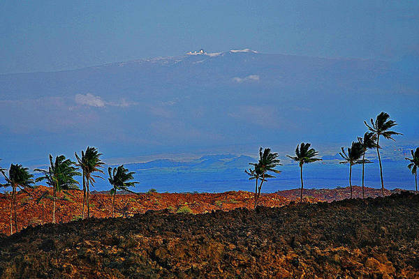 Photograph - Majestic Mauna Kea by Bette Phelan