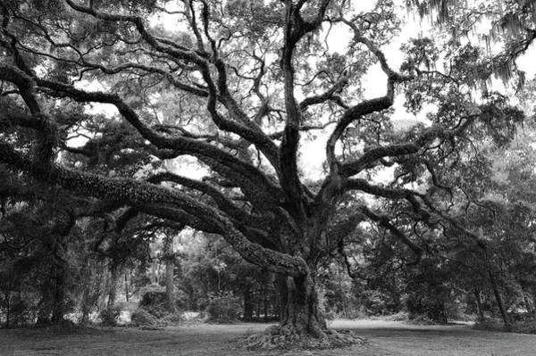 Wall Art - Photograph - Majestic Oak by Richard Rizzo