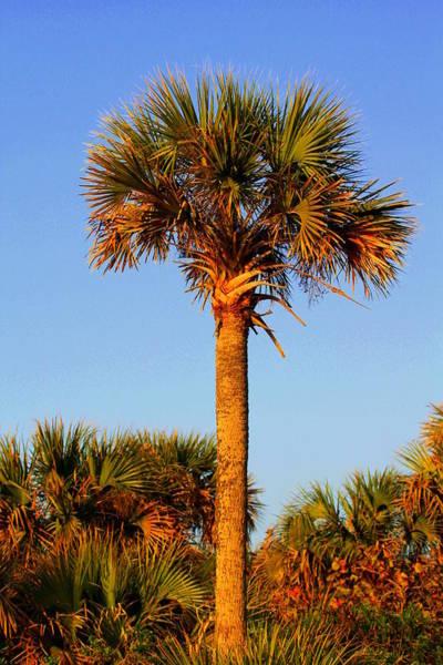 Photograph - Majestic Palm by Sean Allen