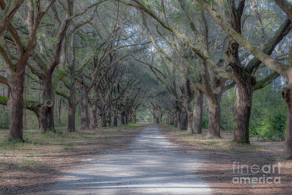 Photograph - Majestic Path by Dale Powell