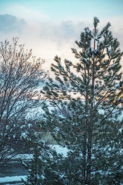 Wall Art - Photograph - Majestic Pine by Nancy Marie Ricketts
