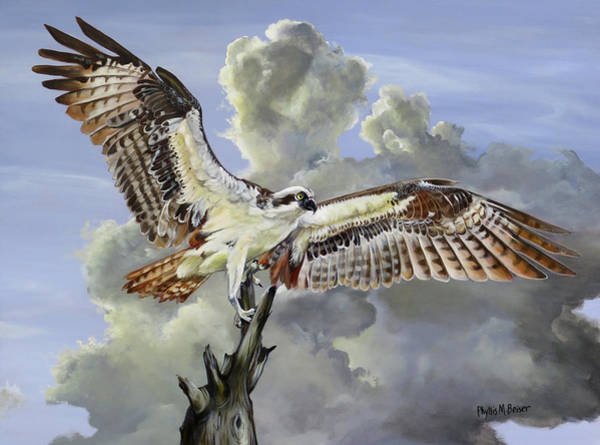 Wall Art - Painting - Majestic Sea Hawk by Phyllis Beiser