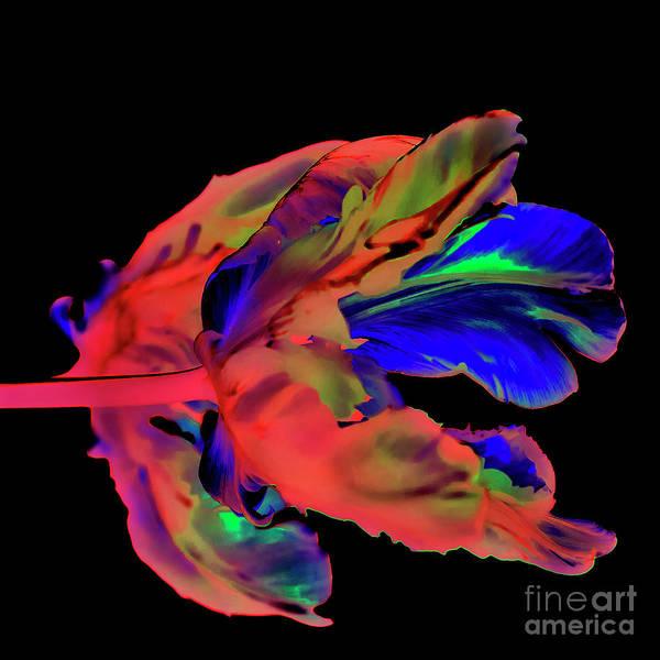 Digital Art - Majestic Sound Of 2018 by Silva Wischeropp