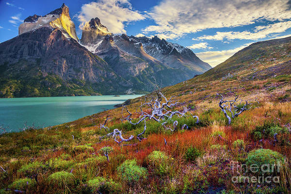 Wall Art - Photograph - Majestic Torres Del Paine by Inge Johnsson