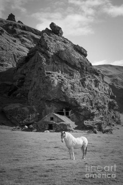Sheep Rock Wall Art - Photograph - Majestic White Horse Bw by Michael Ver Sprill