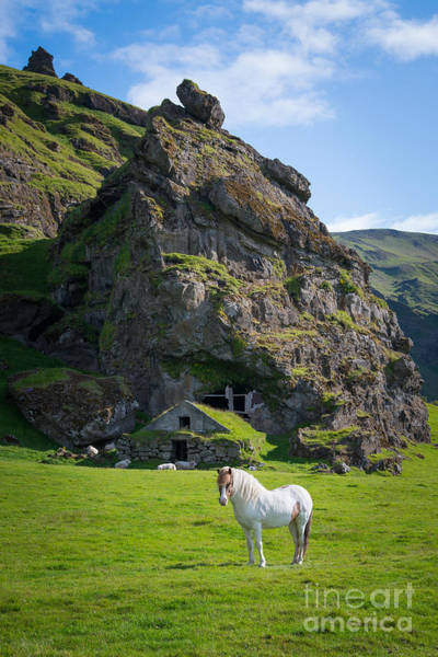 Sheep Rock Wall Art - Photograph - Majestic White Horse by Michael Ver Sprill