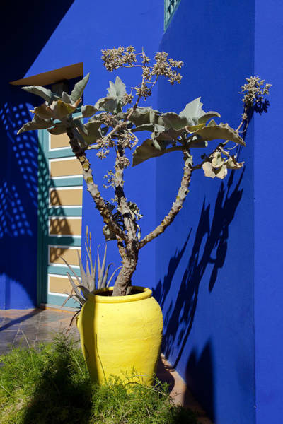 Photograph - Majorelle Blue And Plants by Aivar Mikko