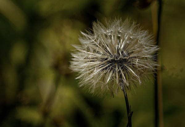 Photograph - Make A Wish by Dave Bosse