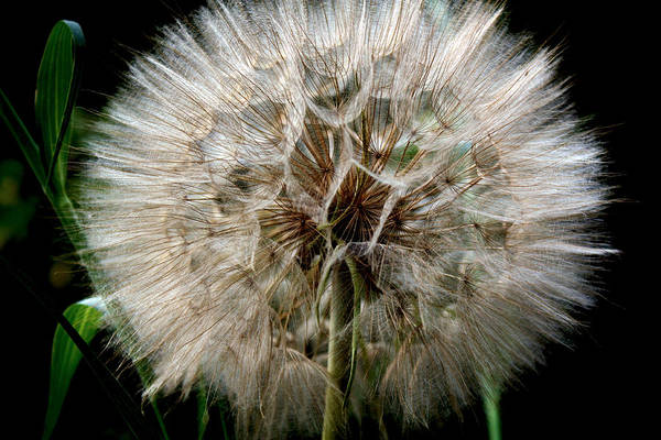 Photograph - Make A Wish by David Matthews