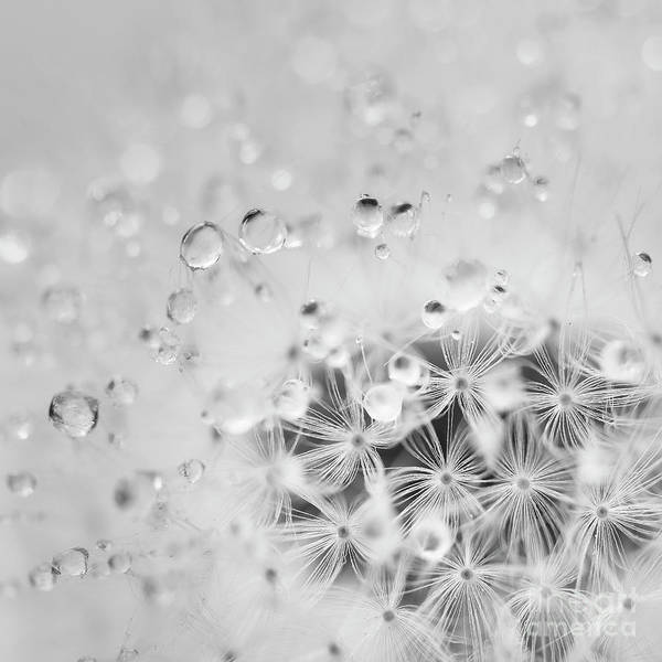 Wall Art - Photograph - Make A Wish For The Day by Masako Metz