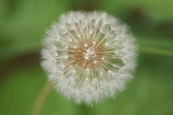 Wall Art - Photograph - Make A Wish by Heather Green