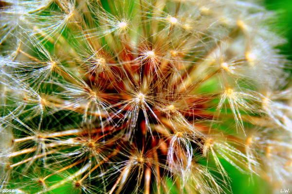 Photograph - Make A Wish by Lisa Wooten