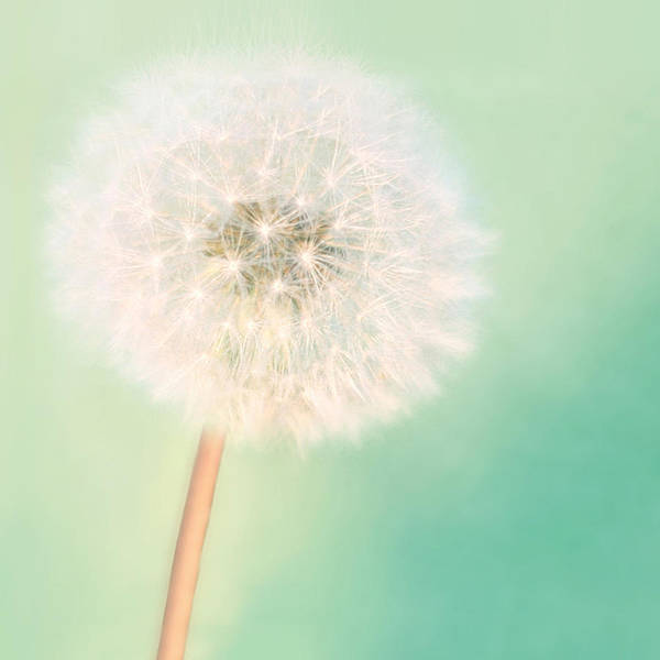 Extra Large Photograph - Make A Wish - Square Version by Amy Tyler