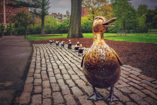 Ducks Photograph - Make Way For Ducklings In Boston  by Carol Japp