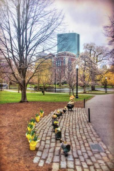 Photograph - Make Way For Ducklings In Spring - Boston Public Garden by Joann Vitali