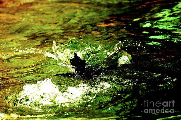 Photograph - Making A Splash by Lori Tambakis