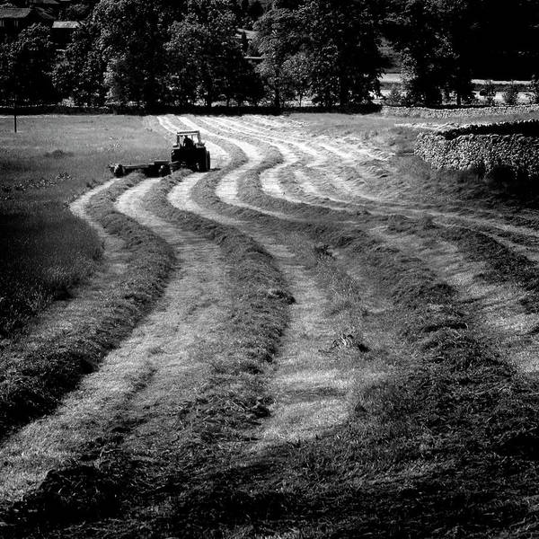 Wall Art - Photograph - Making Hay by Peter OReilly