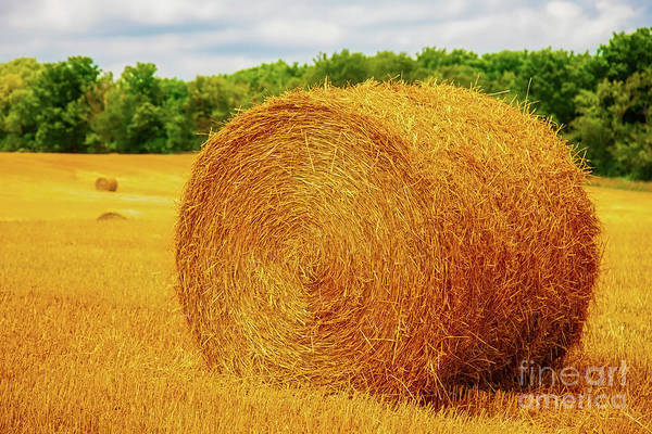Photograph - Making Hay by Tom Jelen