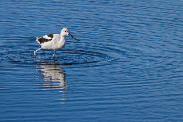 Photograph - Making Ripples by Dawn Currie