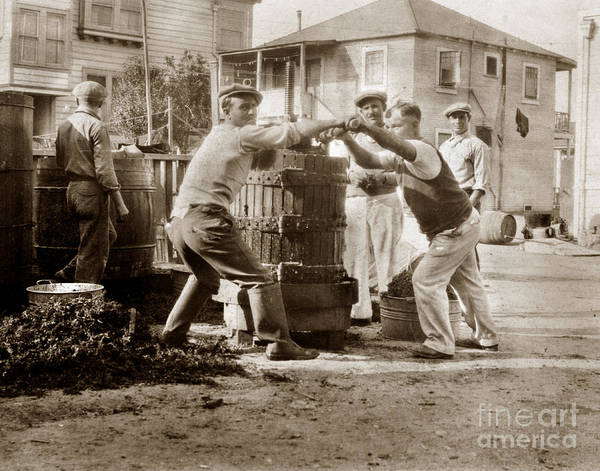 Photograph - Italians  Making Wine Old Wine Press Monterey Circa 1920 by California Views Archives Mr Pat Hathaway Archives