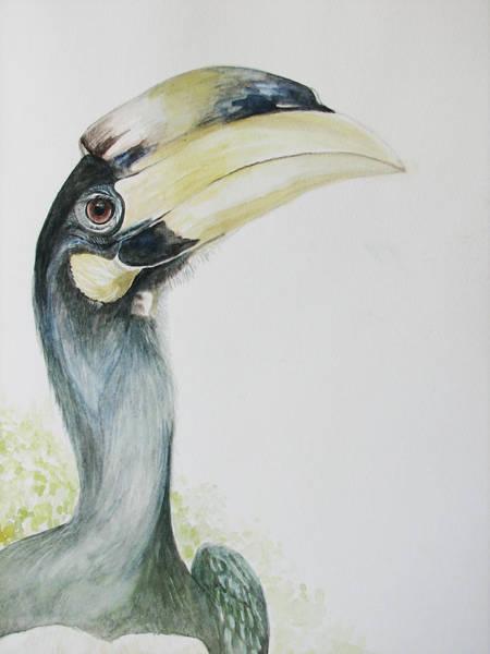Hornbill Painting - Malabar Pied Hornbill -juvenile Bird by Sasitha Weerasinghe