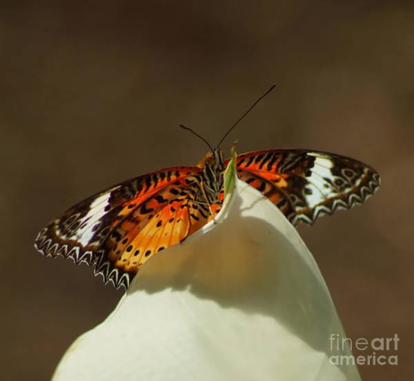 Butterfly On Flower Digital Art - Malay Lacewing Butterfly by Carolyn Krek