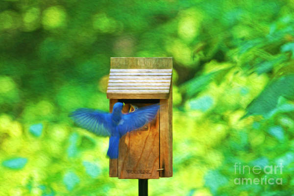 Bird House Photograph - Male Blue Bird Feeding Baby by Laura D Young