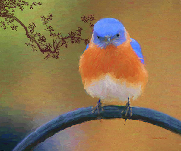 Photograph - Male Bluebird-painted by Ericamaxine Price