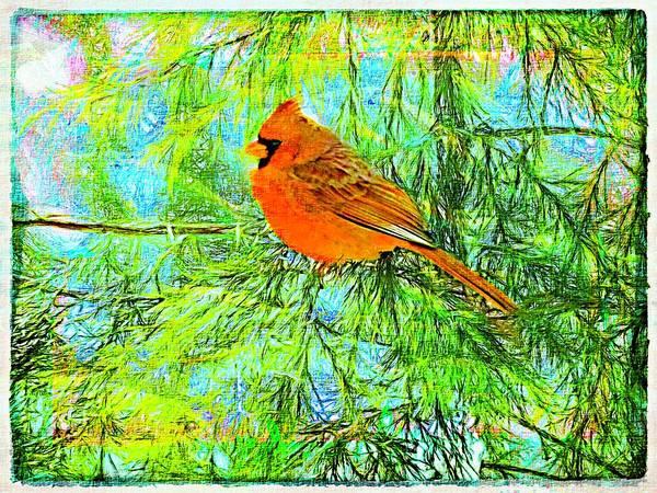 Male Cardinal In Juniper Tree Art Print