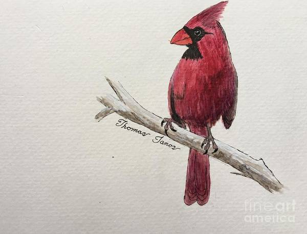 Painting - Male Cardinal In Winter by Thomas Janos
