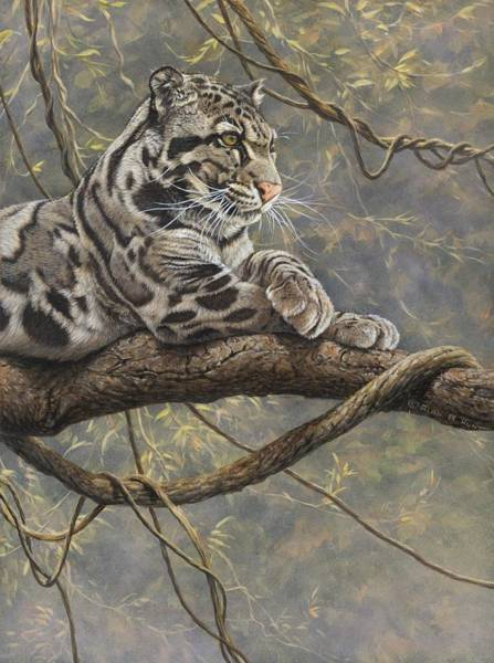 Painting - Male Clouded Leopard by Alan M Hunt