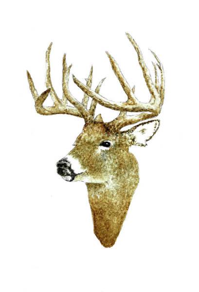 Wall Art - Painting - Male Deer #2 by Michael Vigliotti