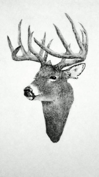 Wall Art - Drawing - Male Deer - Black And White by Michael Vigliotti