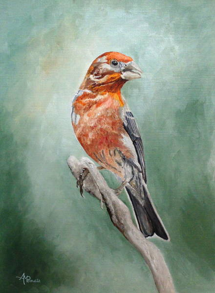 House Finch Wall Art - Painting - Male House Finch by Angeles M Pomata