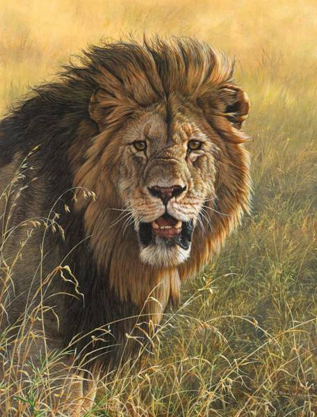 Painting - Male Lion 2 by Alan M Hunt