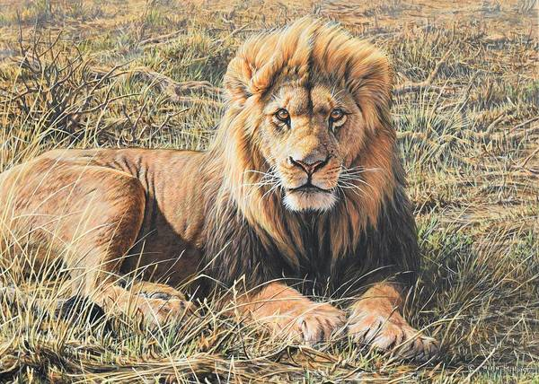 Painting - Male Lion Portrait by Alan M Hunt