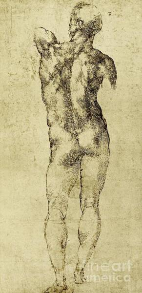 Male Nude Drawing - Male Nude by Michelangelo