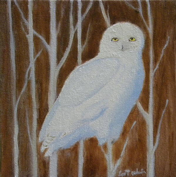 Male Snowy Owl Portrait Art Print