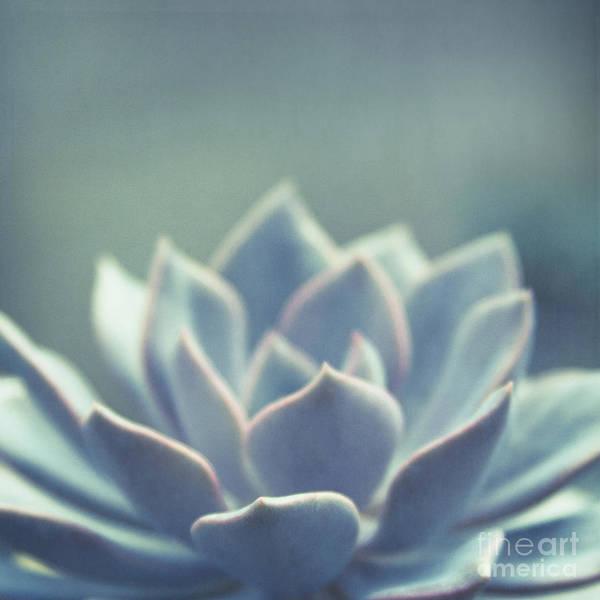 Photograph - Maliko Jewel by Sharon Mau